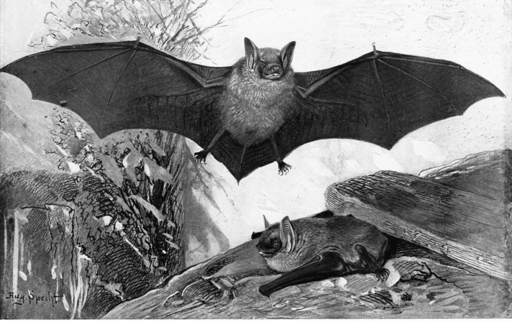 bats for EL